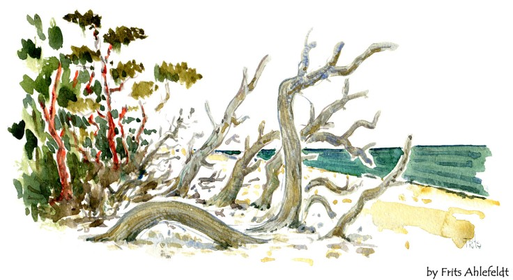 Trees on beach Bornholm watercolor by frits ahlefeldt