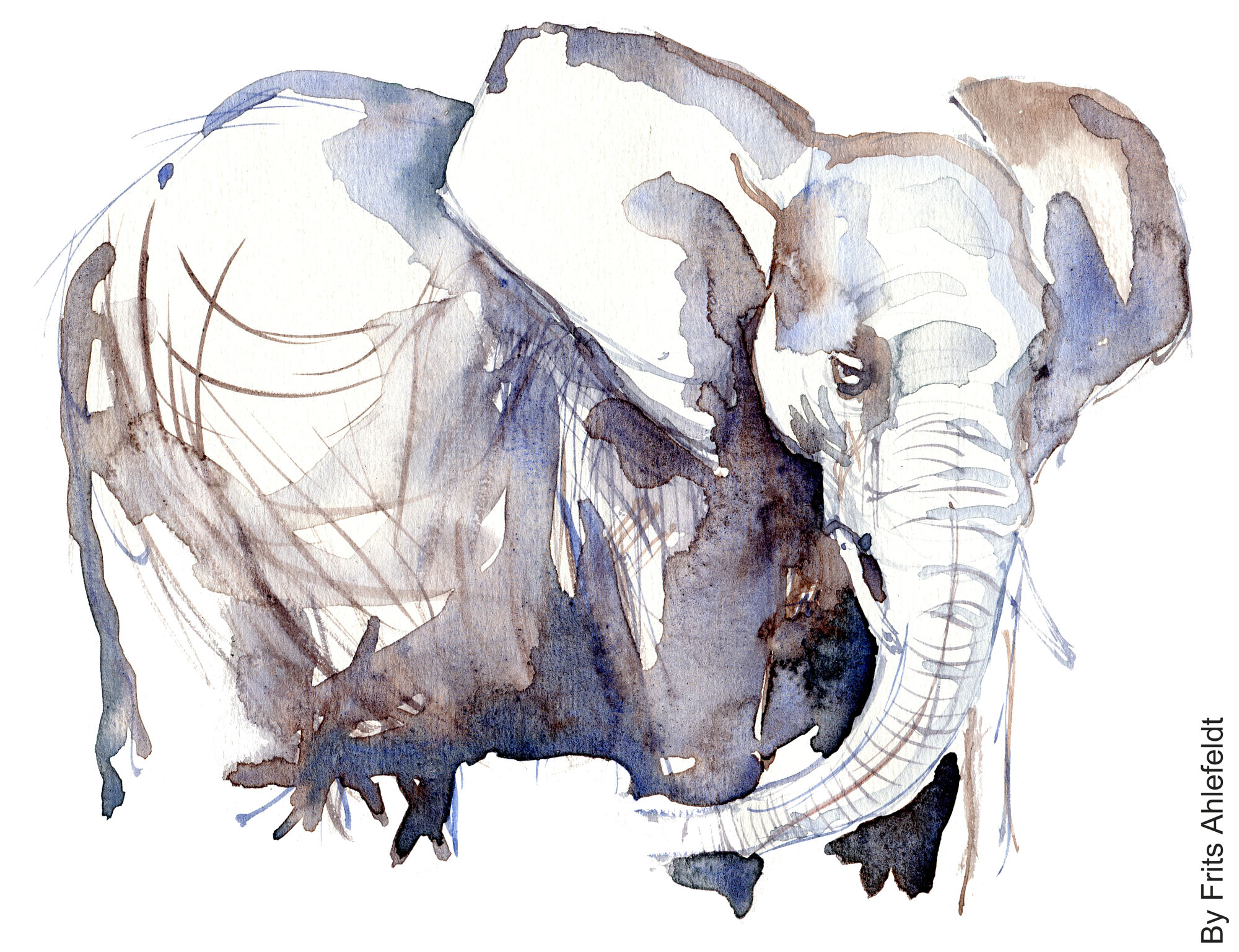 Elephant watercolor-by-frits-ahlefeldt