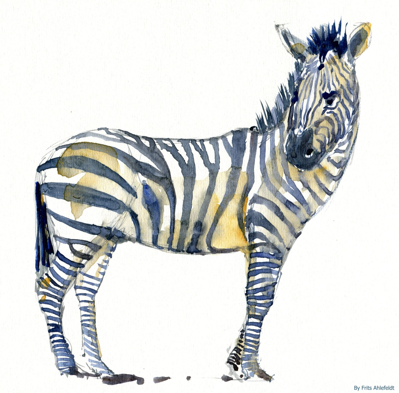 zebra watercolor-by-frits-ahlefeldt