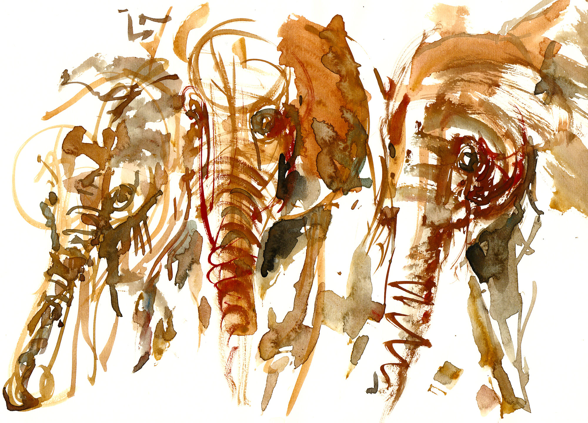 Elephants watercolor-by-frits-ahlefeldt