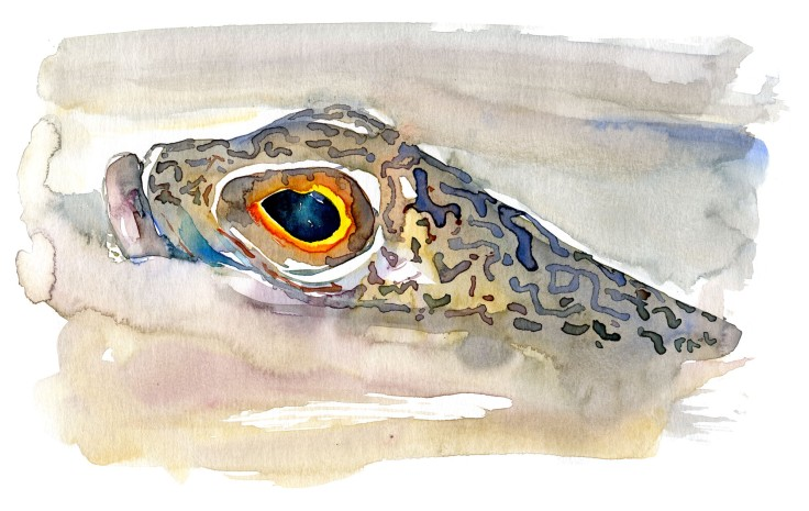 fish in sand Watercolour by Frits Ahlefeldt