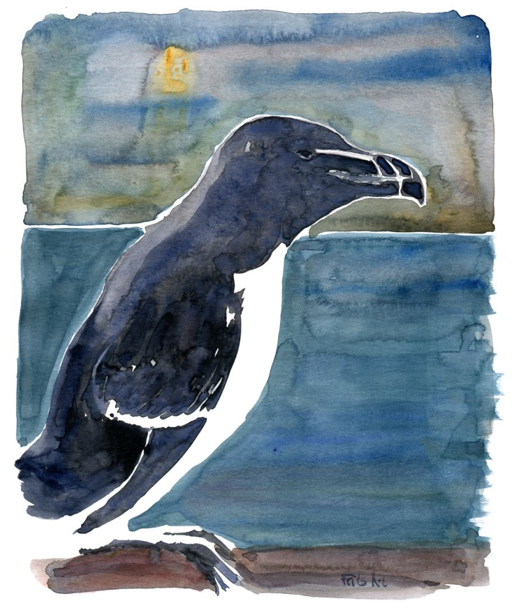 Razorbill watercolor with sea background, by Frits Ahlefeldt
