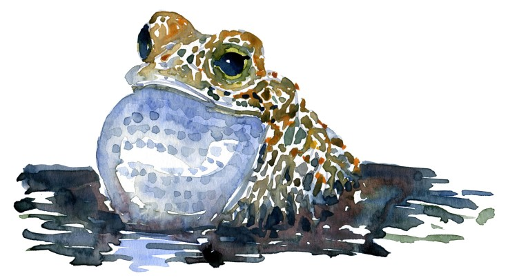 singing frog watercolour by Frits Ahlefeldt