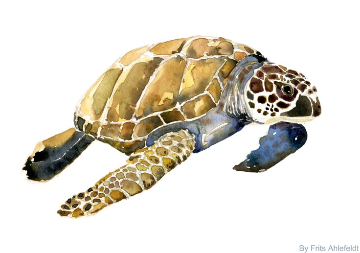 Sea Turtle watercolor-by-frits-ahlefeldt