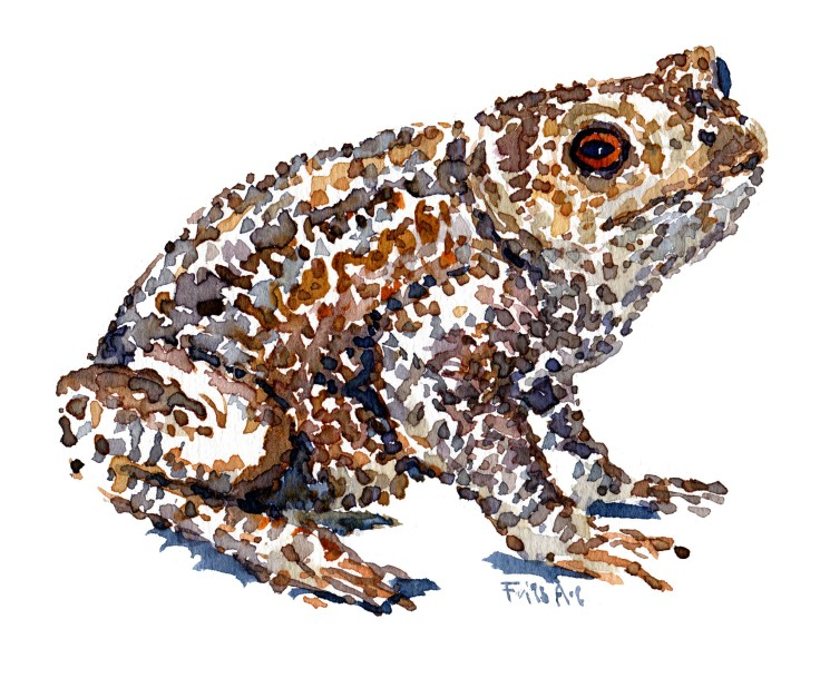 Toad Watercolour by Frits Ahlefeldt