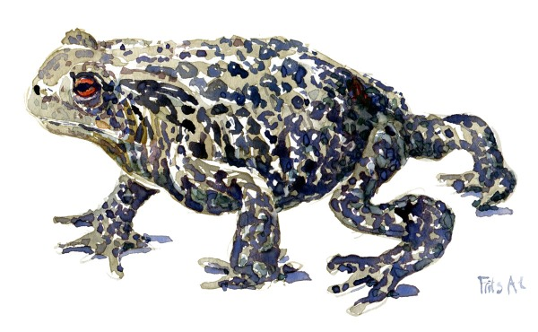 toad walking Watercolour by Frits Ahlefeldt