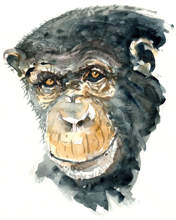 Chimp watercolor-by-frits-ahlefeldt