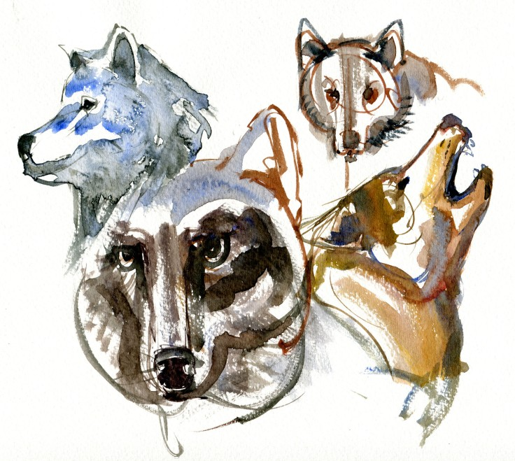 wolf sketches Watercolour by Frits Ahlefeldt