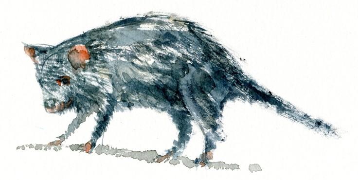 Tasmanian devil Watercolour by Frits Ahlefeldt
