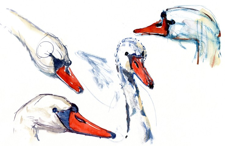 swans Watercolour by Frits Ahlefeldt
