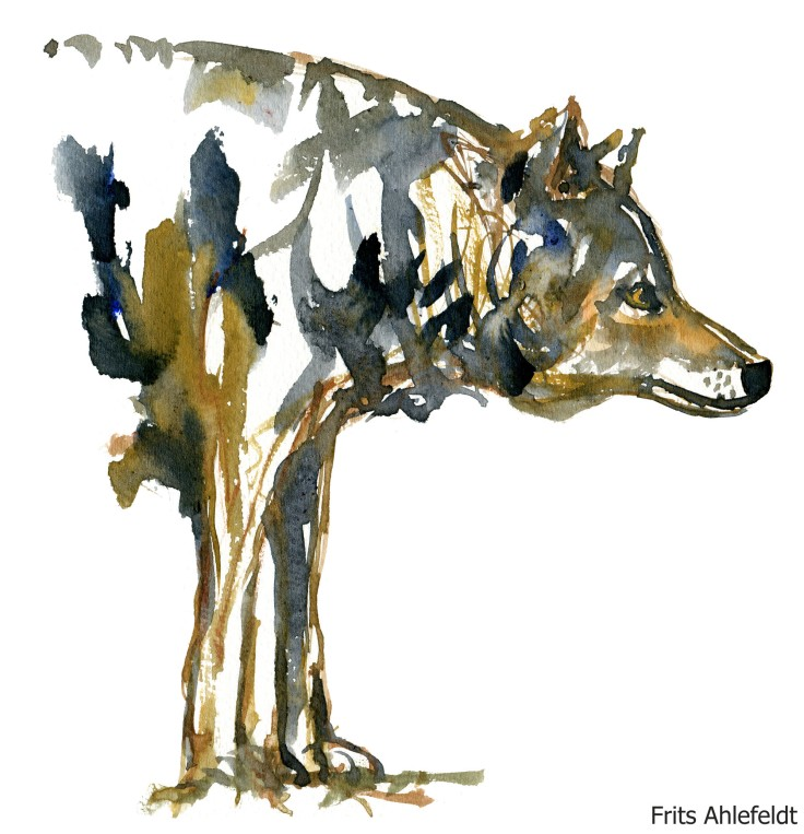 wolf Watercolour by Frits Ahlefeldt