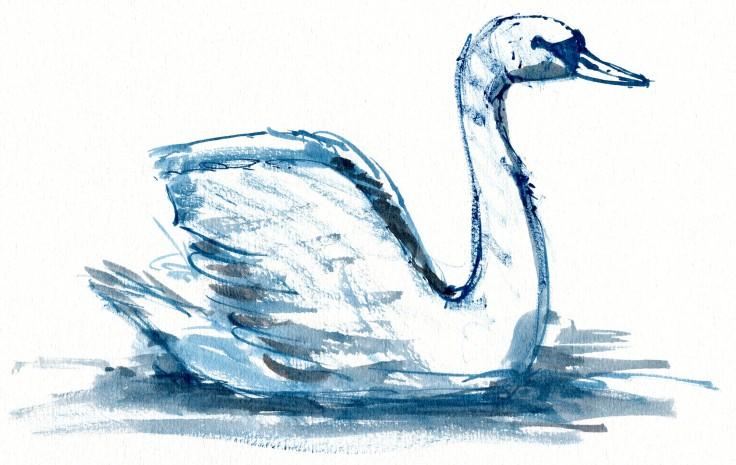 Swan Watercolour by Frits Ahlefeldt
