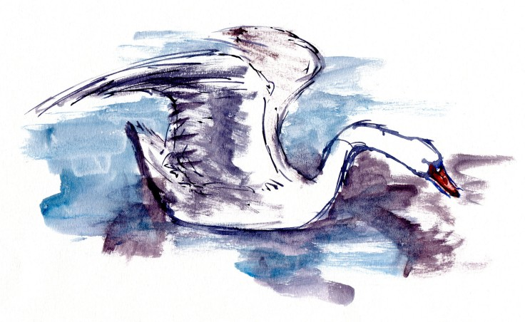 Swan Watercolour by Frits Ahlefeldt