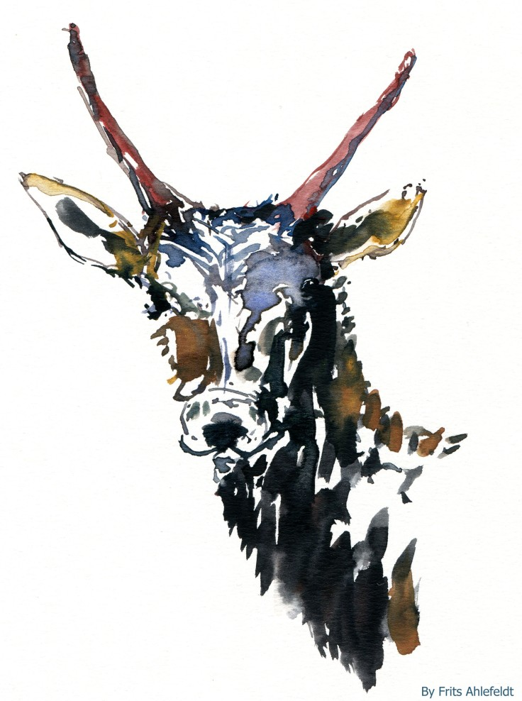 animal with horns Watercolour by Frits Ahlefeldt