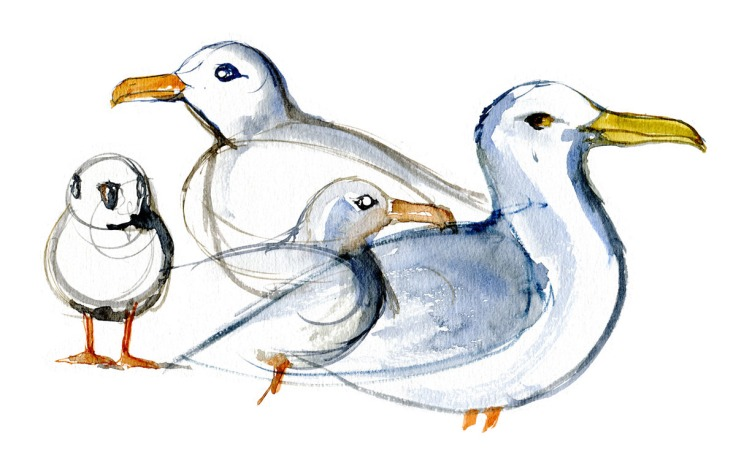 Seagulls Watercolour by Frits Ahlefeldt