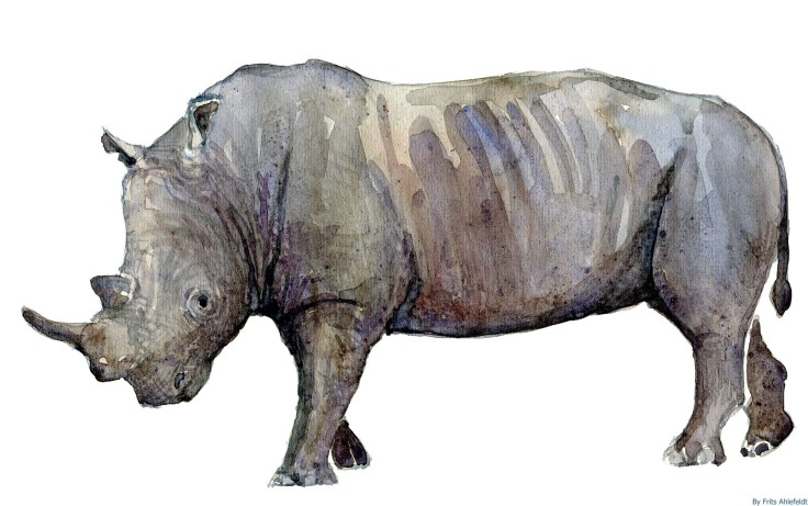 Rhino watercolor-by-frits-ahlefeldt