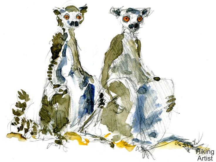 lemur Watercolour by Frits Ahlefeldt
