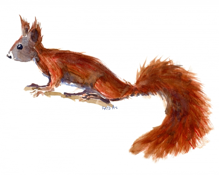 watercolor of red squirrel