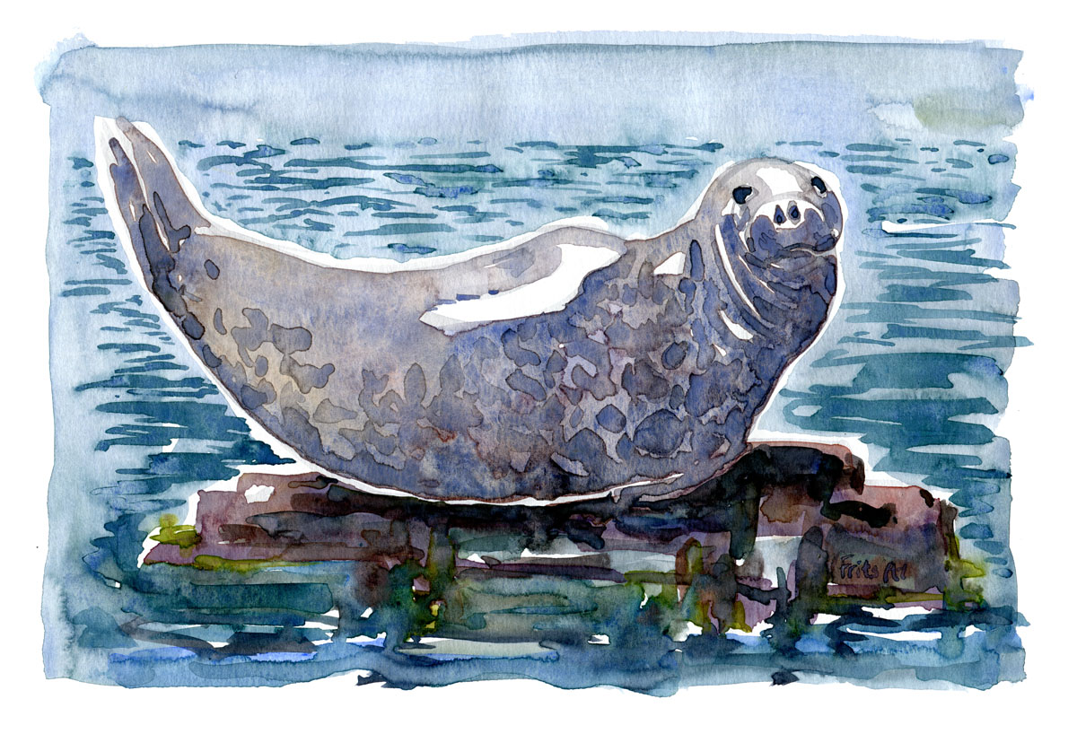 Seal Mammal watercolor by Frits Ahlefeldt