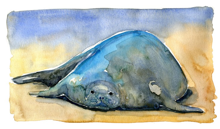 Monk seal Watercolour by Frits Ahlefeldt