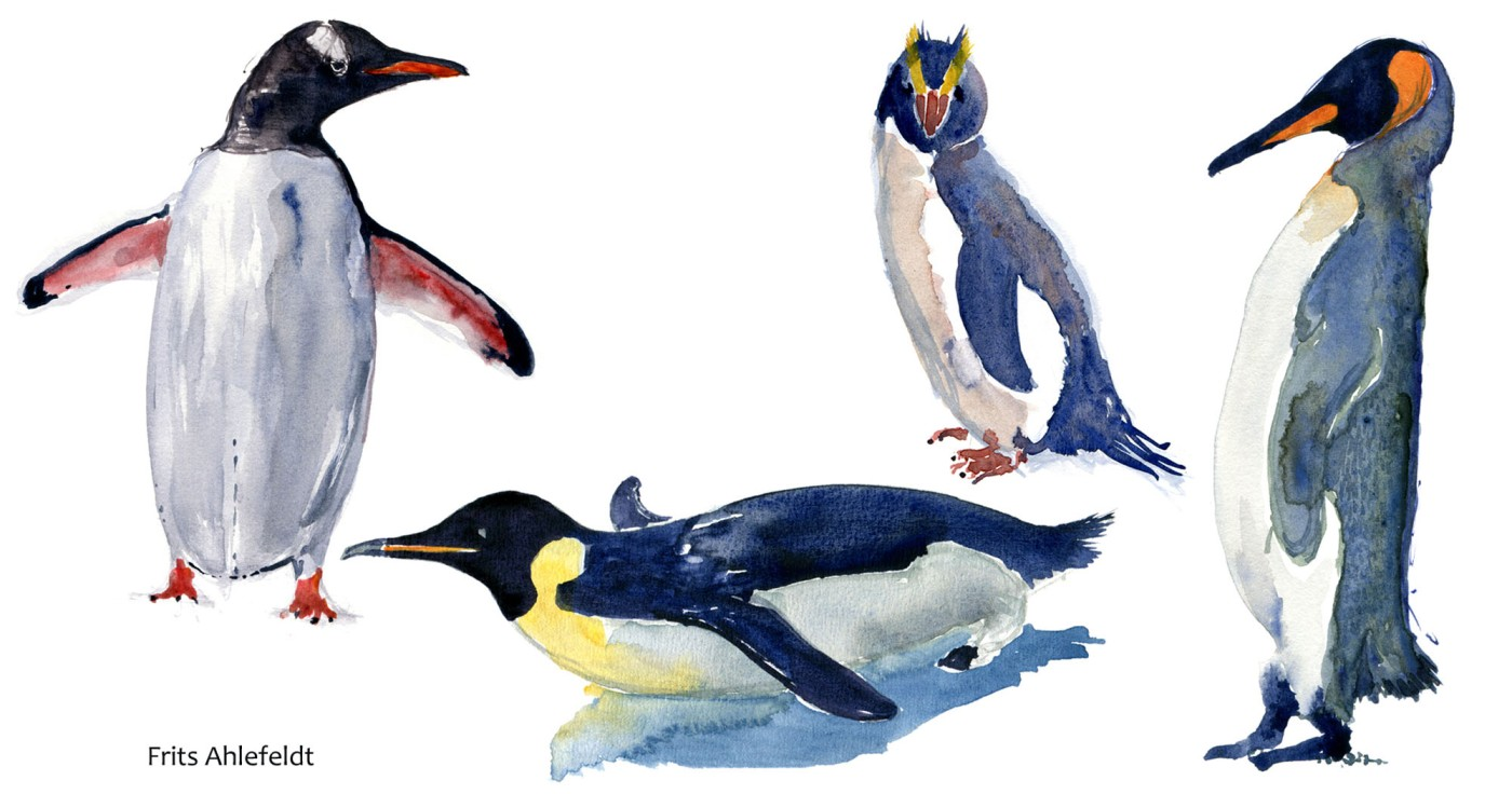 penguins Watercolour by Frits Ahlefeldt