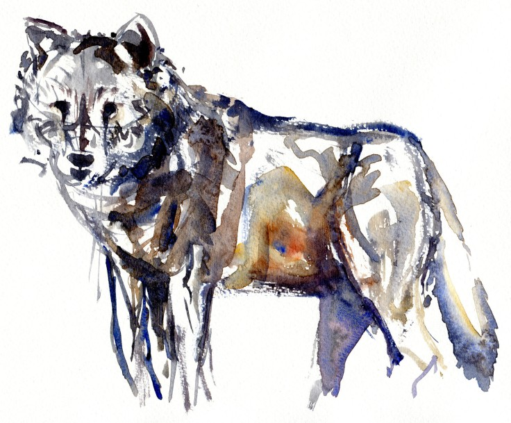 Wolf standing Watercolour by Frits Ahlefeldt