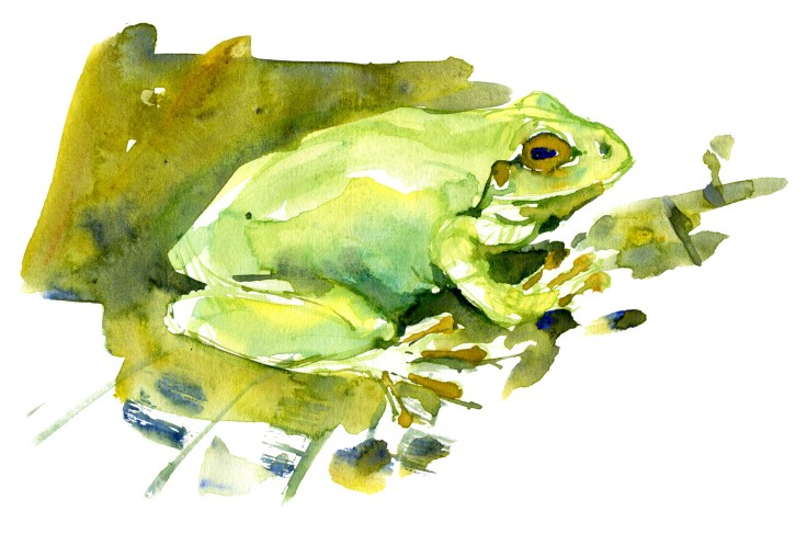 Green frog sitting Watercolour by Frits Ahlefeldt
