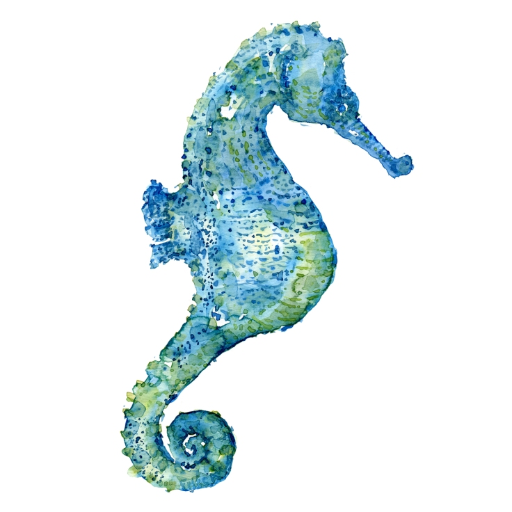 Blue seahorse watercolor by Frits Ahlefeldt