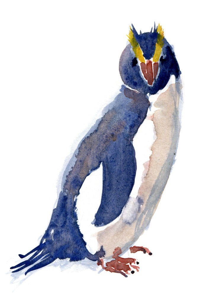 Penguin Watercolour by Frits Ahlefeldt