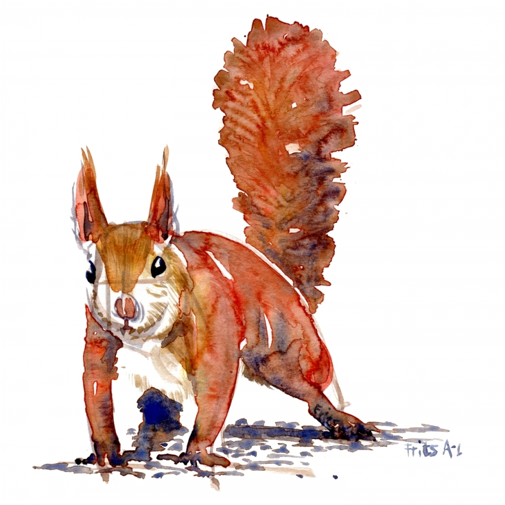 Watercolor of Squirrel