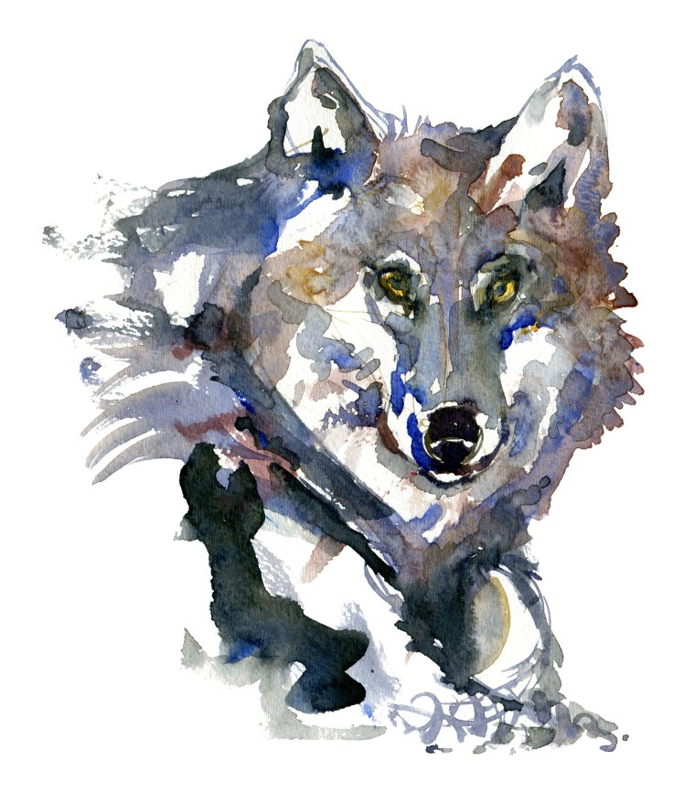 wolf head Watercolour by Frits Ahlefeldt