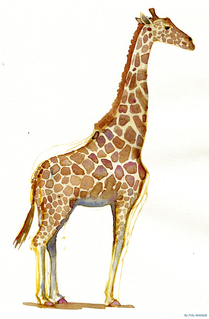 giraffe Watercolour by Frits Ahlefeldt