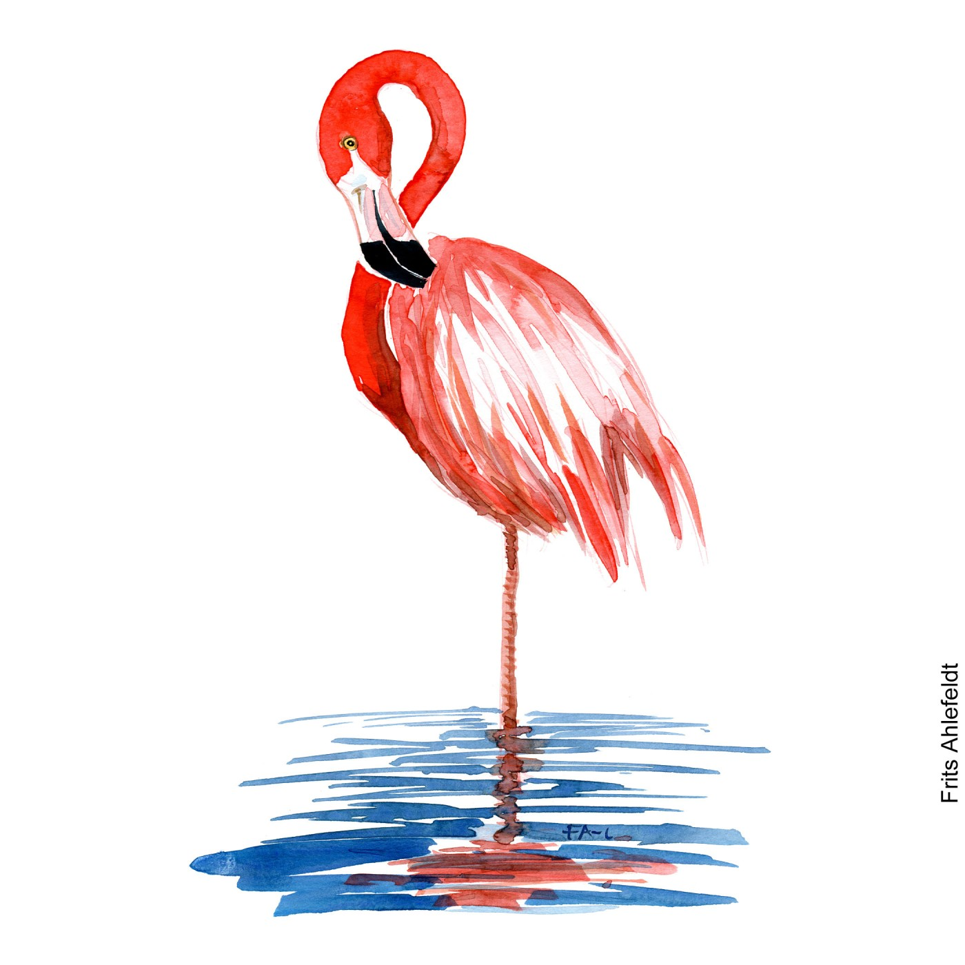 Watercolor illustration of flamingo watercolour by Frits Ahlefeldt