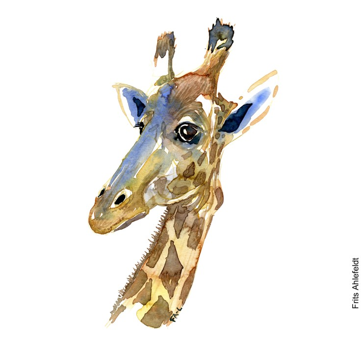 Watercolor of giraffe. Illustration by Frits Ahlefeldt