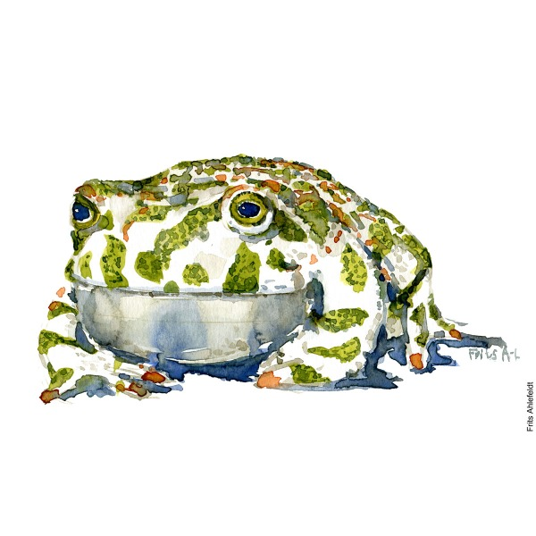 Green toad Front. watercolor illustration handmade by Frits Ahlefeldt