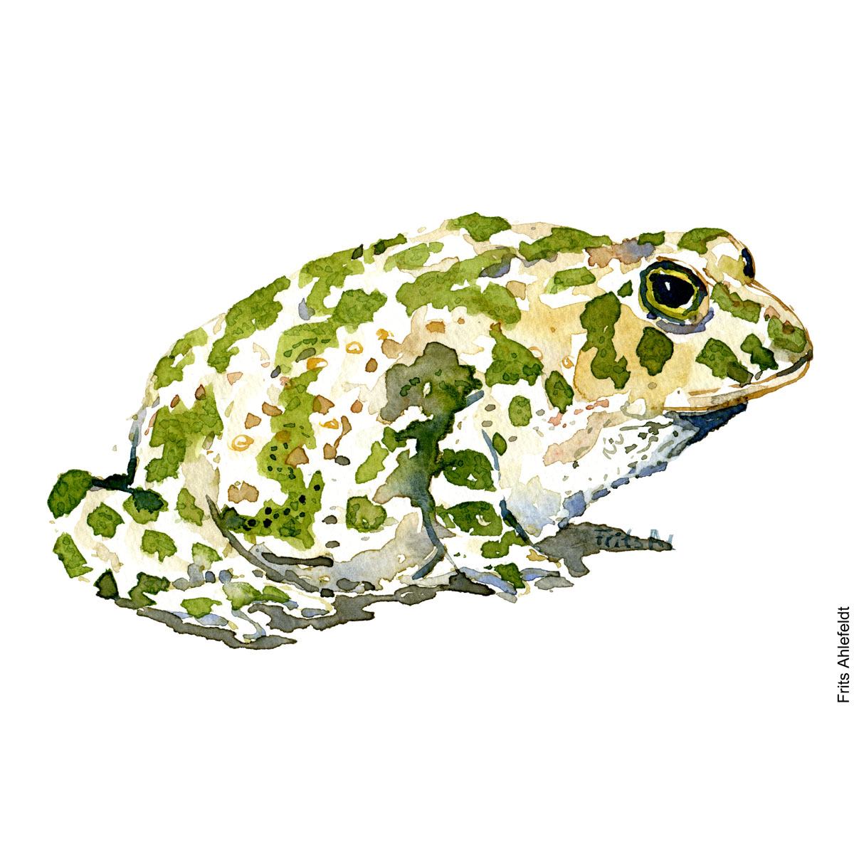 Green toad sideview watercolor illustration handmade by Frits Ahlefeldt