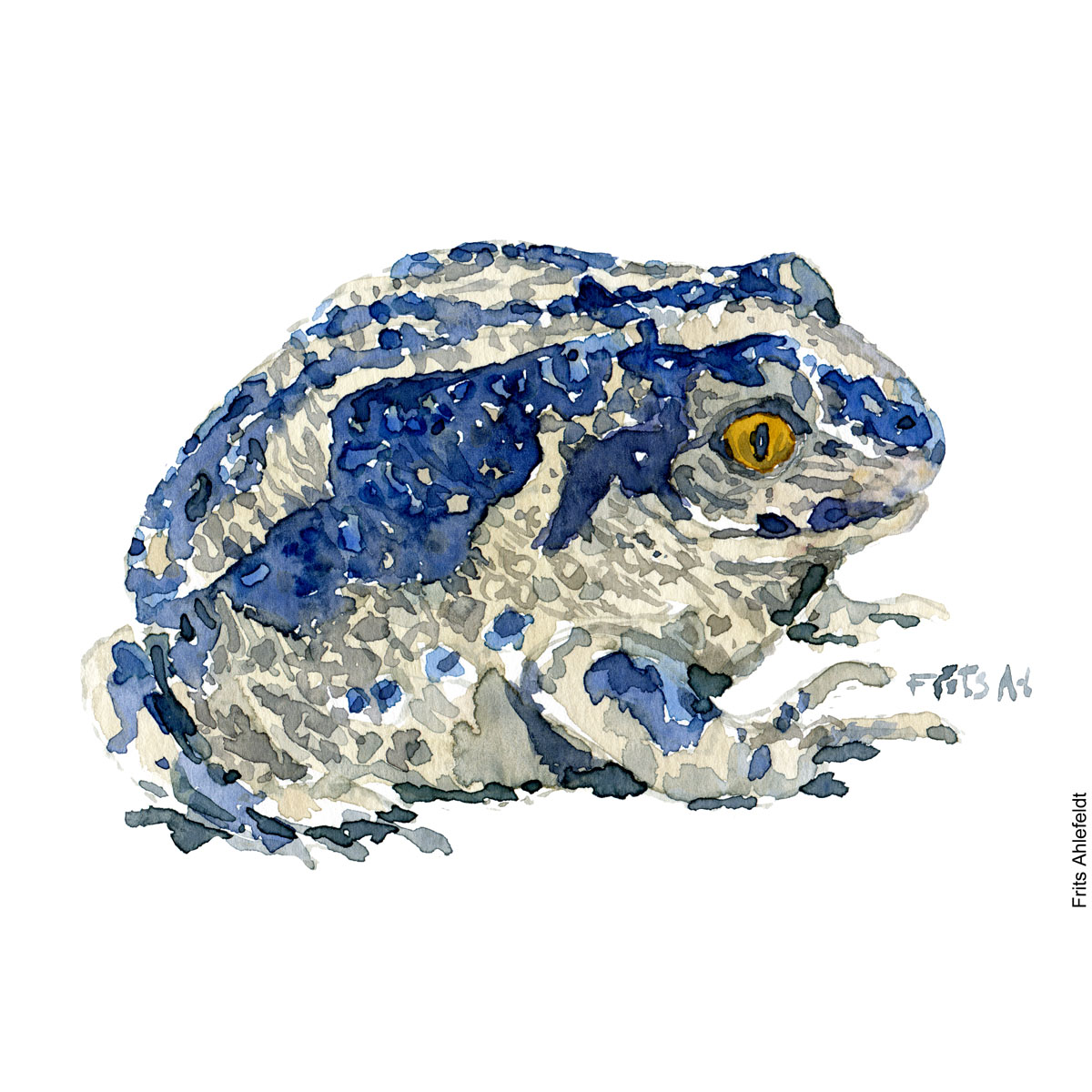 Bluish Common spade foot toad. watercolor illustration handmade by Frits Ahlefeldt